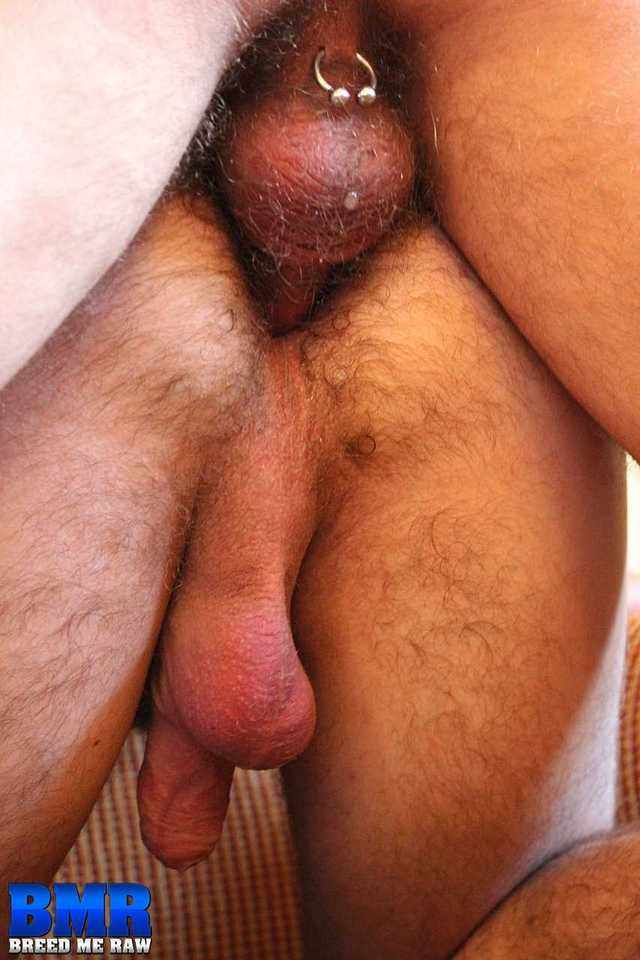 gay porn daddy Pic hairy porn category gay amateur rimming daddy bareback raw brock chad butch breed bloom