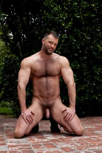 Hairy Gay Porn gay hardcore porn star muscle bear hairy huge pecs bottom ass jockstrap colt studio group gruff stuff brenden cage fucking sucking masculine guy