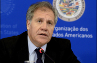 Latin Gay Pics luis almagro average trans woman latin america will die aged