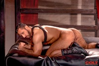 Adam Champ Porn hairy muscle hunk adam champ stars armour waterbucks gruff stuff more from colt studio group pic