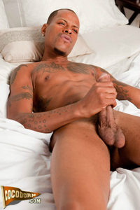 back gay porn cocodorm romeo james black gay porn star schoneseelen officially back
