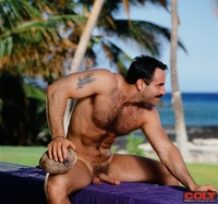 bear gay porn Pic steve kelso gay porn star colt studio group hairy hung muscle bear manhunt net