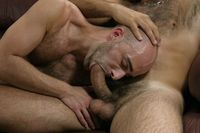 bear sex gay hairy dudes nude gay bears bear one