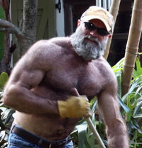 big gay daddy porn daddy bear gay ass hairy musclebear muscled beefy nude