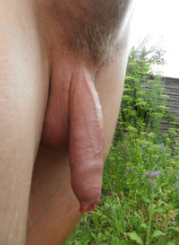 pics of hairy cocks soft hairy penis nude guy cock